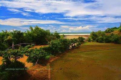 View gabungan antara sawah, sungai dan laut.