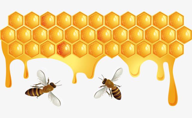 هل ذكور النحل كسالى ؟