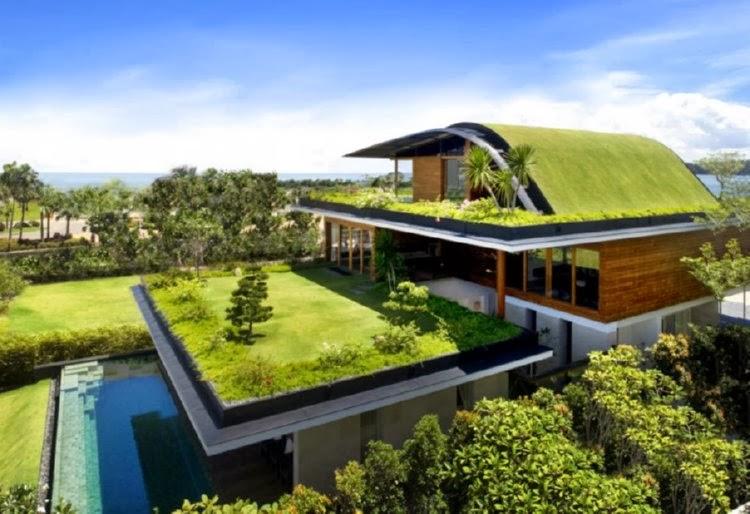techos verdes