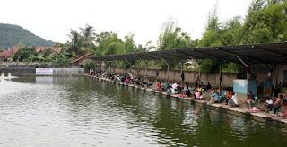 Umpan-Ikan-Mas-Air-Hijau