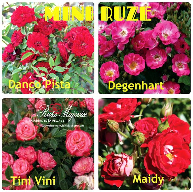 mini ruze, sadnice prodaja ruza bosna i hercegovina