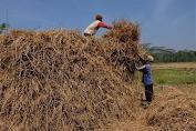 Limbah Pertanian Melimpah, Kementan Akan Bangun Perusahaan Pakan Ternak di NTB.