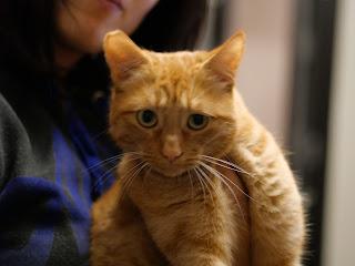 cat photo GX9