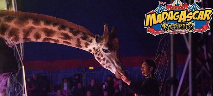 Bologna: affluenza record al Maya Orfei Circo Madagascar Continua con successo la tappa nel capoluogo emiliano, show sino al 2 febbraio