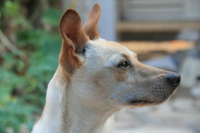 פנקו הכלב, צילום אורנה לבנה