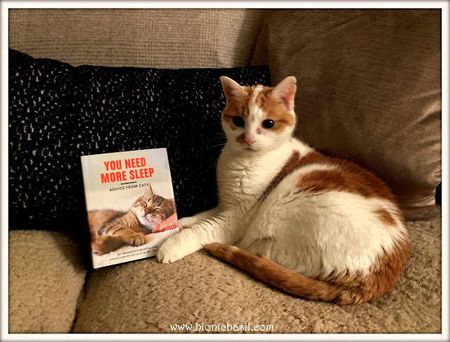 Feline Fiction on Fridays #108 at Amber's Library ©BionicBasil®  Amber's Copy You Need More Sleep