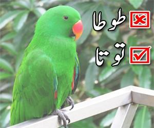toota or parrot