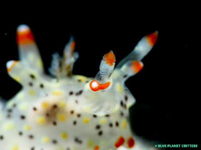 Underwater photography 水攝 Macro 微距 Scuba dive 潛水 em5mark2
