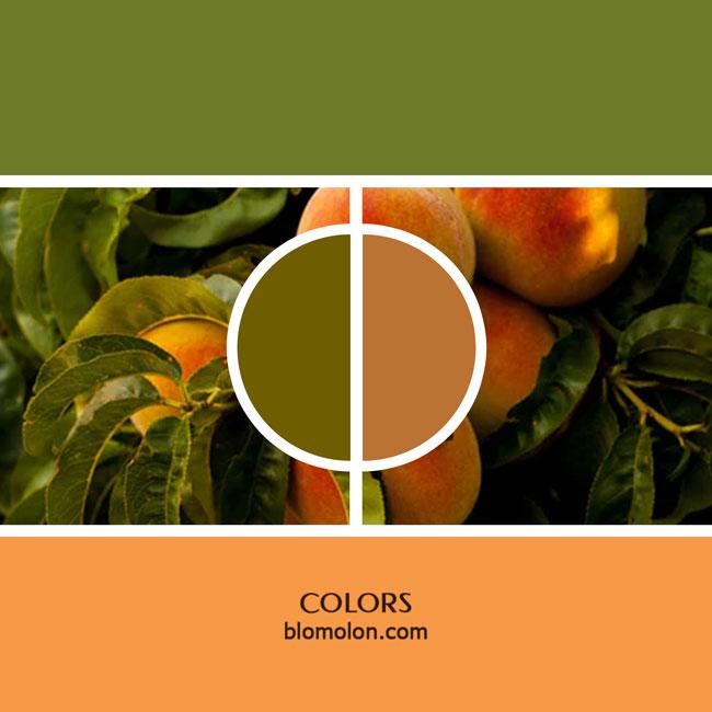variedad_en_color_color_15