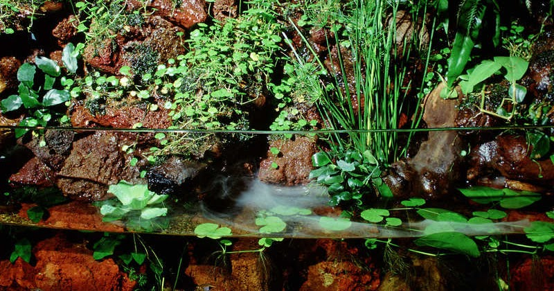 Seni Membuat Paludarium Atau Aquaterrarium Emosianisme