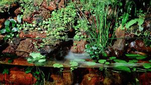 Seni Membuat Paludarium atau Aquaterrarium