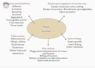 Points of function of platelets
