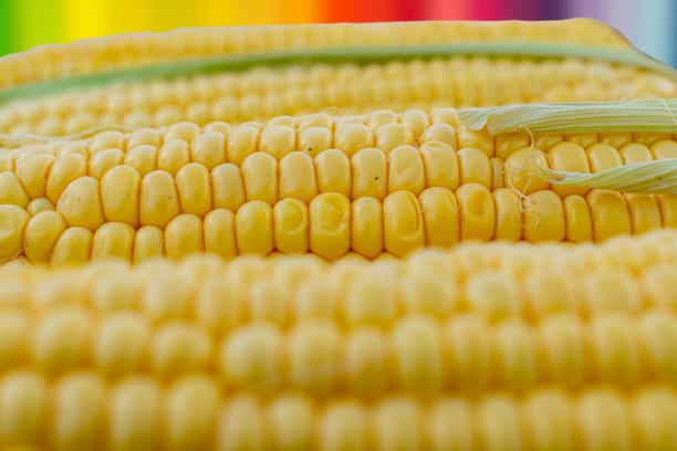 सबसे जल्दी तैयार होने वाली फसल कौन सी है और कैसे उगाई जाती है
