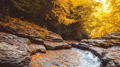 HD wallpaper Autumn, flow, fallen leaves, trees