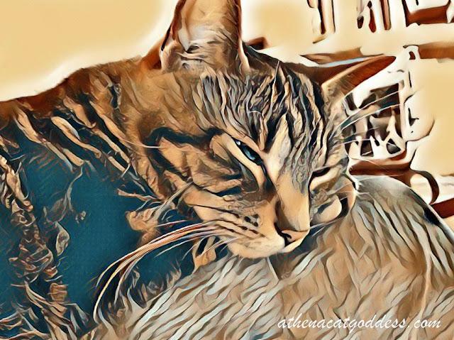 caturday art lunapic fairy effect
