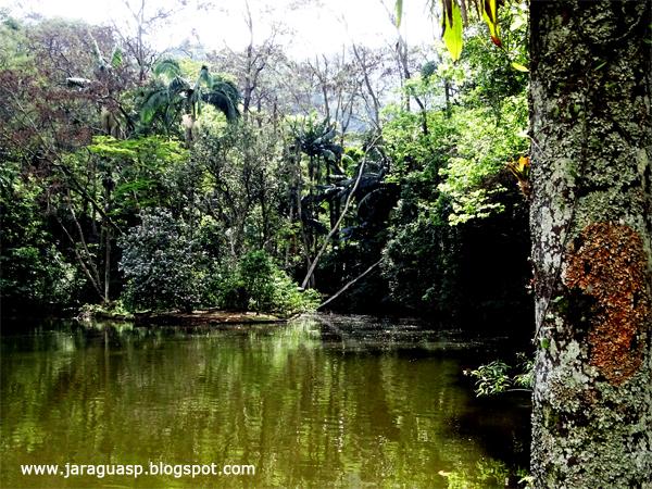 O PEJ tem 492 hectares, nos quais abriga remanescentes da Mata Atlântica em São Paulo