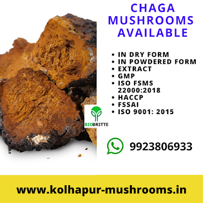 Chaga Mushrooms Available for Sale