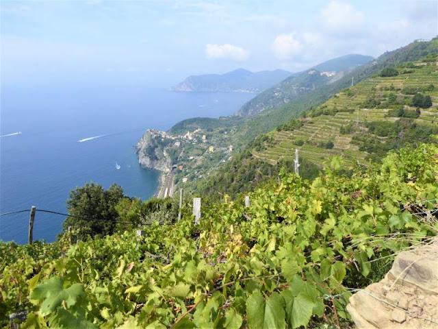 vigneto Cinque Terre Liguria