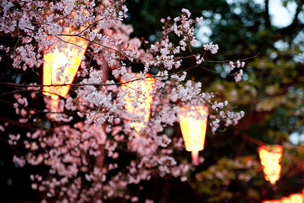 {take me away № 26 | the cherry blossoms of tokyo, japan}