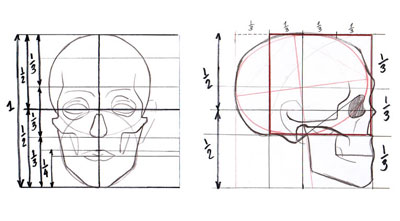 Projects in Computers: Drawing: Basic Face / Head Proportions