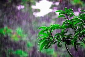 Μπορούν οι μέλισσες να πετάξουν στη βροχή;