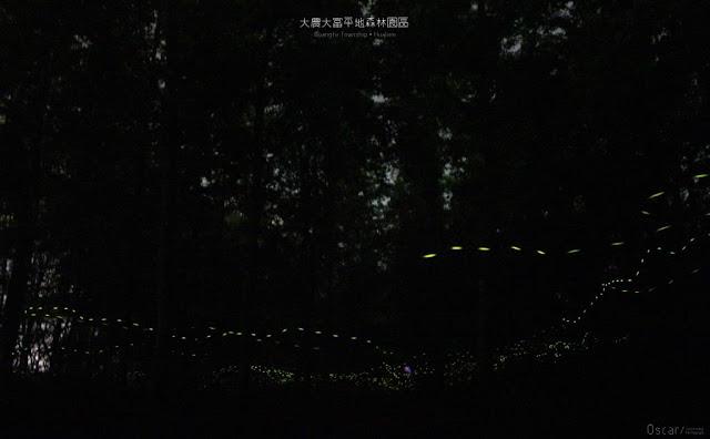 大農大富平地森林園區-7