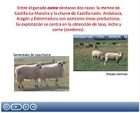 https://1b6de932-a-7cf00707-s-sites.googlegroups.com/a/iesifach.es/geografia-geles/presentaciones/ganaderia%20espa%C3%B1a.swf?attachauth=ANoY7cpbaEnGElh33Jdq7DgypblOls_MSDTyQdzmfIlfRg0kGN3rJp3utgxLg--ReLjPnSNn8fFcDDmGrBcAcp6im6aC9vF08TX7TL_X_j59m4N2Tu2Ym-kKdR8_r54-uLXs1C8xr7F22C4DW_6NkgS-ix0bRqGBg1UebRw8qvDiOVZAM8C89jCDN_uvnUUP8jidkQc00UeCAg0Tq8UTElONHXfGSXsBY7L2jqXCVueAYg7Z7xo7zNB7hecCUPaeXGML_Ma_yZ1v&attredirects=0