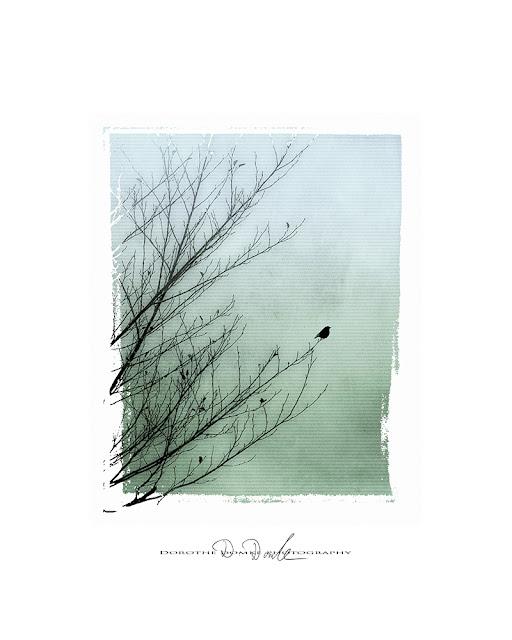 der Vogel. Fotokunst, photoart, Kunst, art, Dorothe Domke, Sauerland