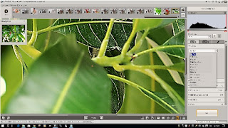 Olympus Viewer 3 Image Edit Window