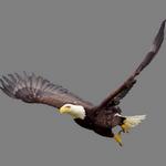 eagle in spanish