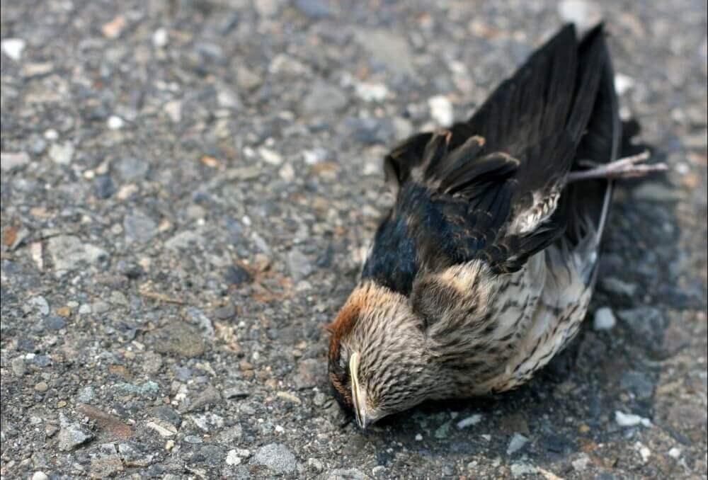 Kuşların İntihar Ettiği Yer Jatinga Hindistan