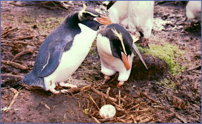 egg laying animals with name - photo #10