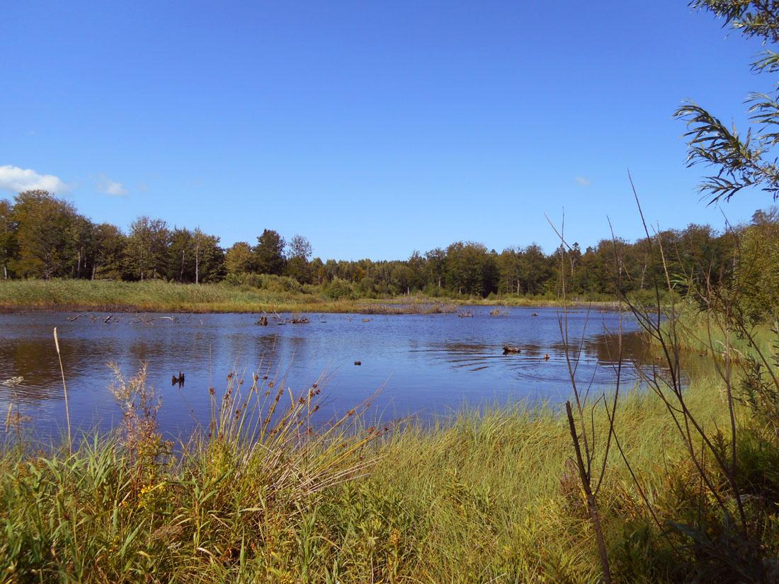 Nel bosco di Ovesholm