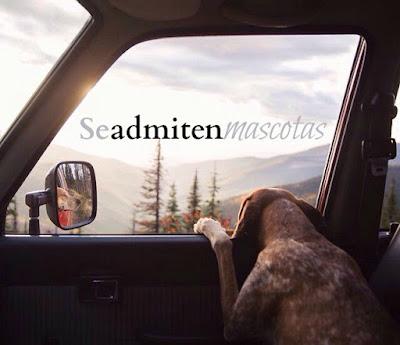 Que-hacer-con-mascotas-en-vacaciones