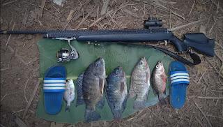Senapan angin paser, senapan ikan, paser ikan, senapan angin paser ikan