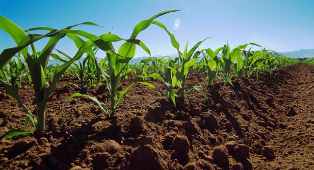 Hacia un nuevo paradigma rural