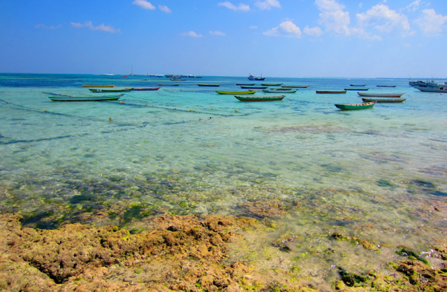 Reefs and Corals in Rote Island