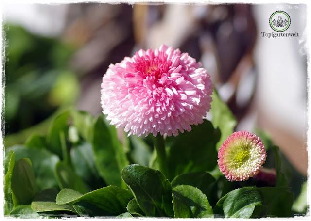 Gartenblog Topfgartenwelt natürliche moderne Osterdeko für den Garten: Blumenschmuck rund ums Haus für Ostern