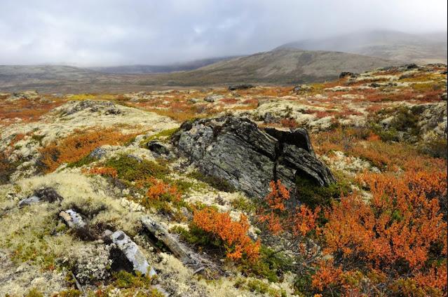 Bioma Tundra : Pengertian, Proses, Ciri - Ciri