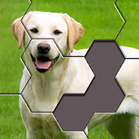 Hexa Jigsaw Puzzle Apk Download for Android