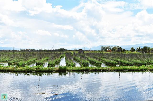 Jardines flotantes en lago Inle, Myanmar