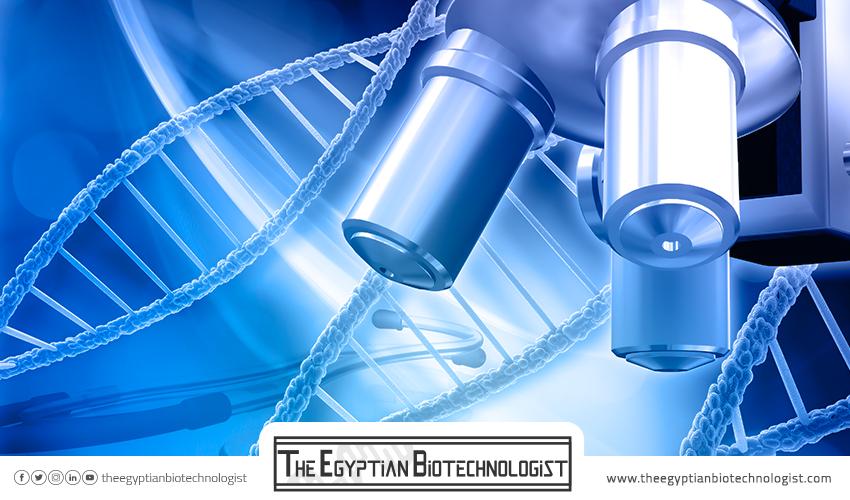 مجال البيئة وعلاقته بالتكنولوجيا الحيوية في مصر