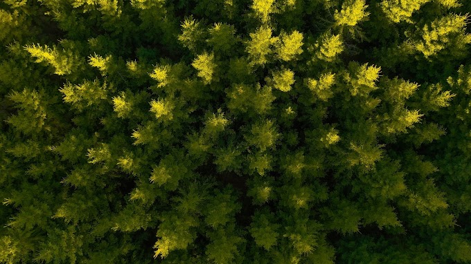 Natureza, Floresta, Imagem de Drone, Foto Aérea