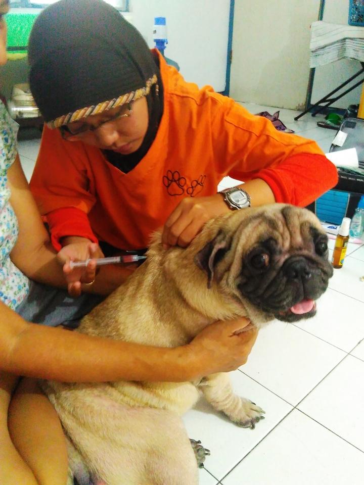 Dokter Hewan Sidoarjo Docen Pet Service Galeri Foto