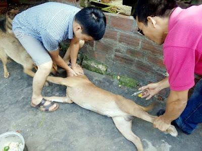 phòng chống bệnh dại ở vật nuôi