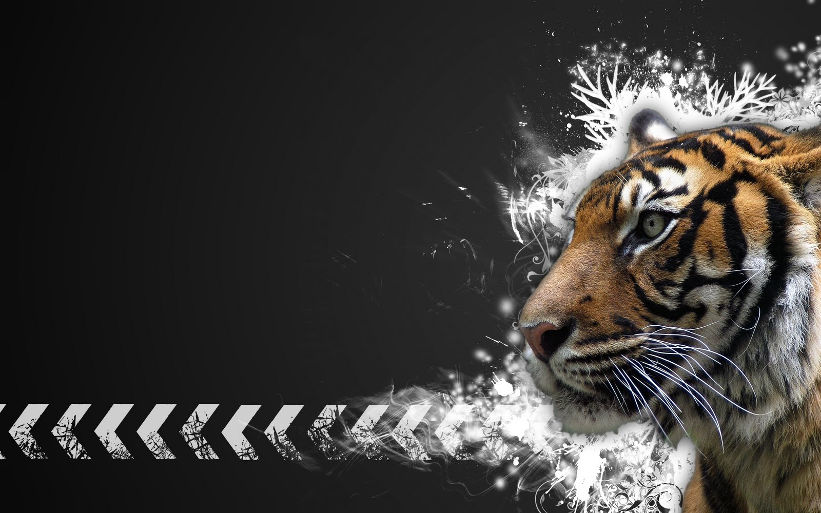 Best Whatsapp Status In 2016 Top 100 Full Hd Tiger Wallpapers