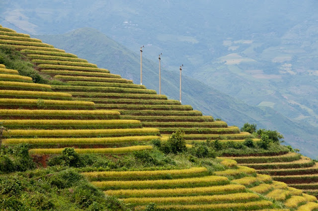 Sapa Terraced Fields - One of the 7 most magnificent terraced fields in the World 1