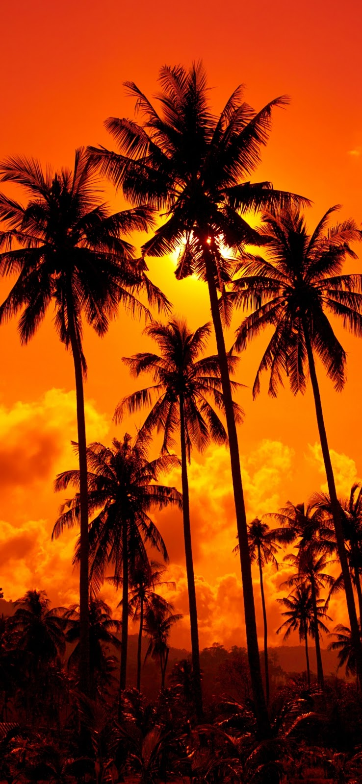 Palm Trees Beautiful Mobile Wallpaper