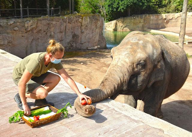 Elefanta Pepita