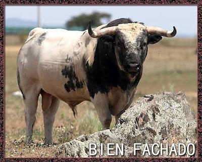 Diccionario taurino 13516335_981769361940499_136666471393773078_n